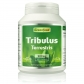 Tribulus Terrestris, 500mg
